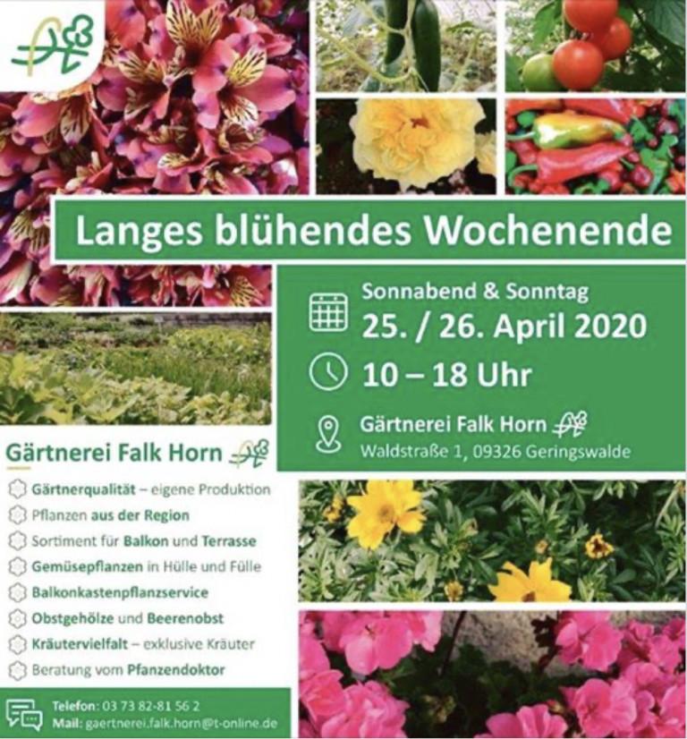 Langes_bluehendes_Wochenende